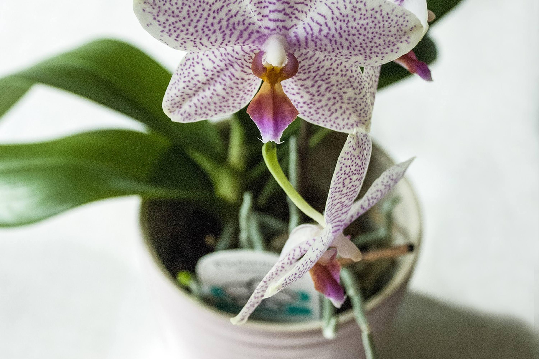 macetas orquideas caracteristicas