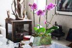 sustrato phalaenopsis