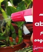 fertilizante orquídeas