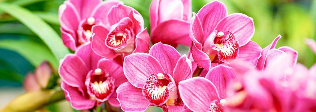 fertilizante orquideas