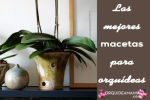Las mejores macetas para orquídeas