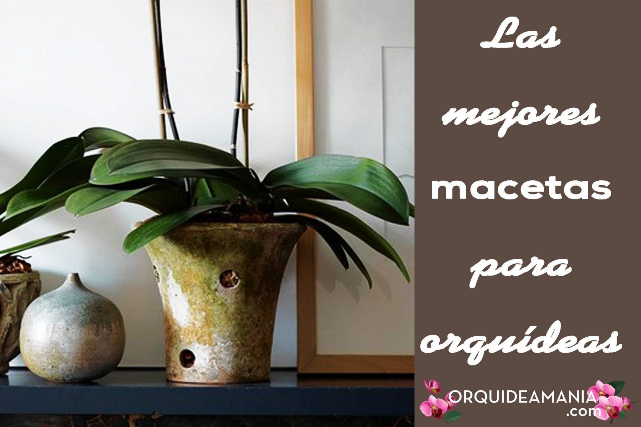Las Mejores Macetas Para Orquídeas Y Cómo Elegirlas Megaguía