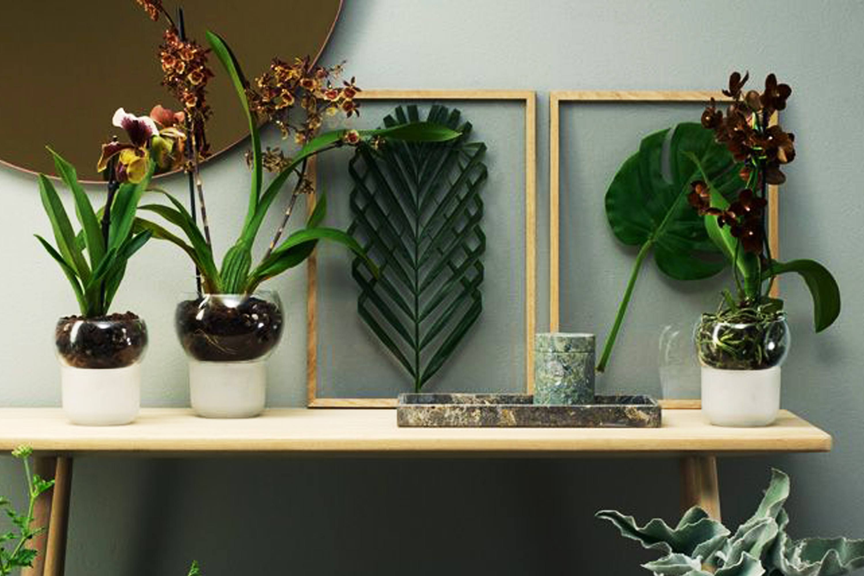 macetas especiales para orquideas