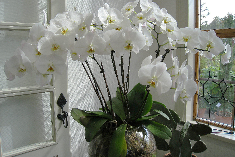 macetas de vidrio para orquideas