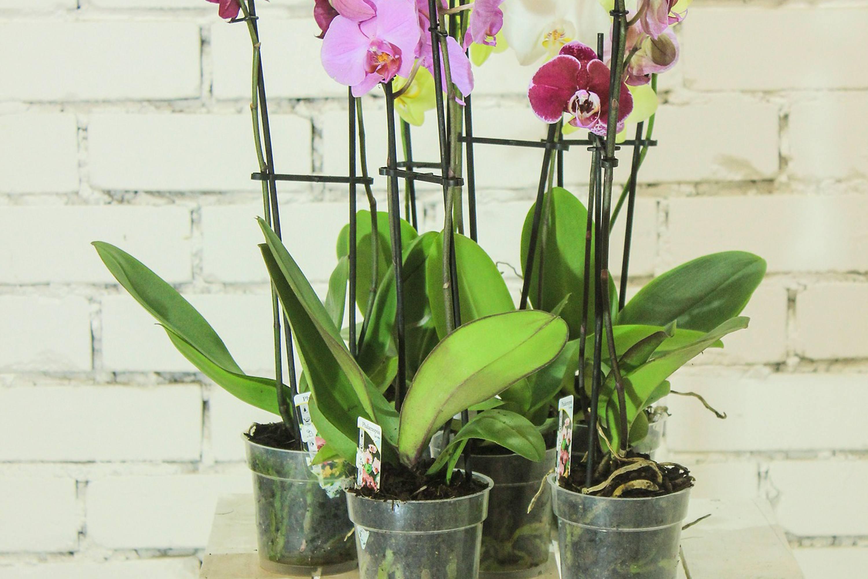 maceta transparente para orquideas