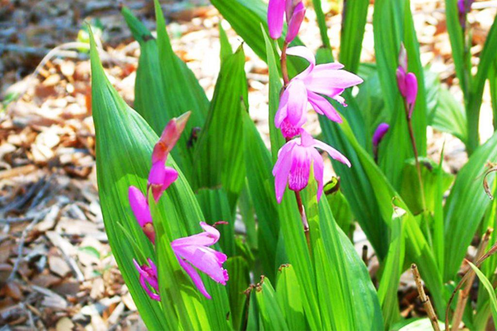 orquideas de tierra sustrato