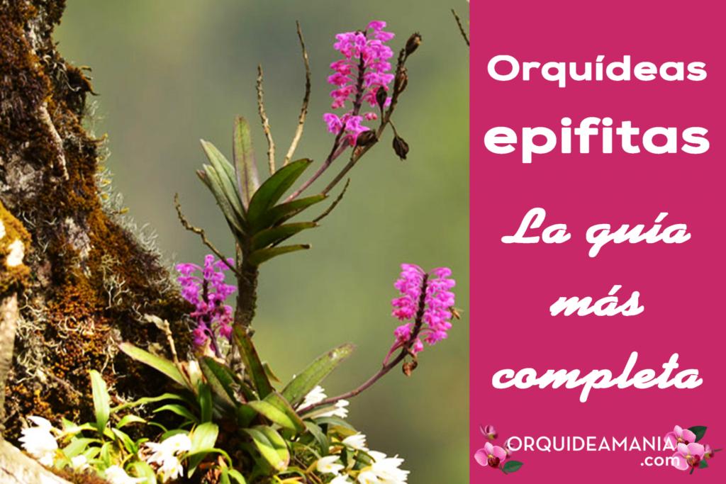 orquideas epifitas guia completa