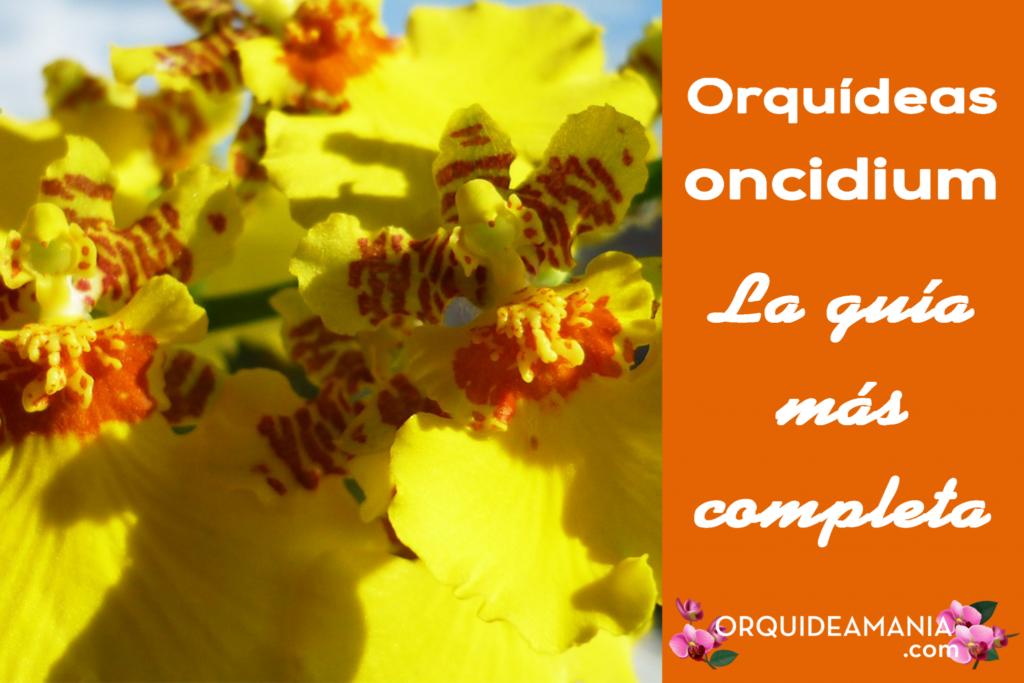 guia completa orquidea oncidium