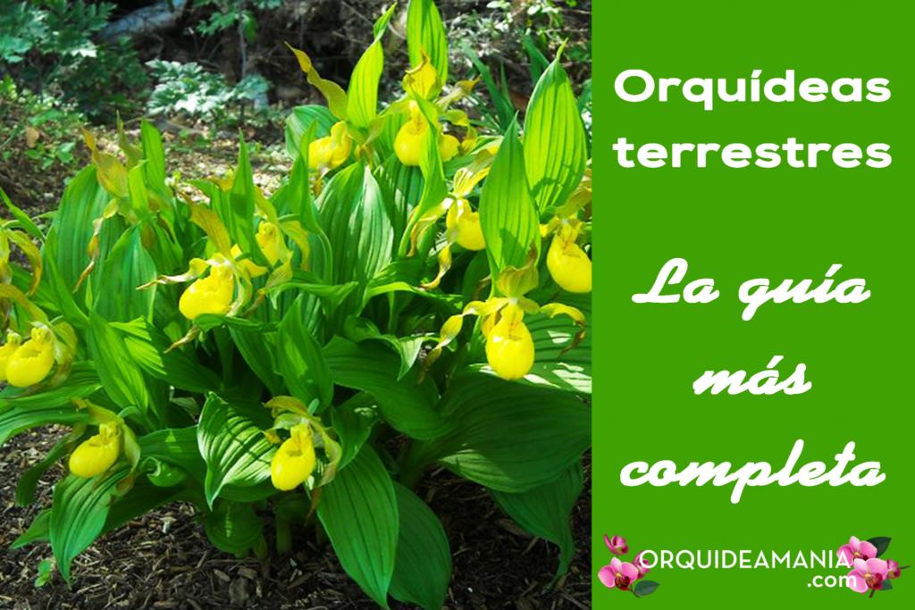 orquideas terricolas