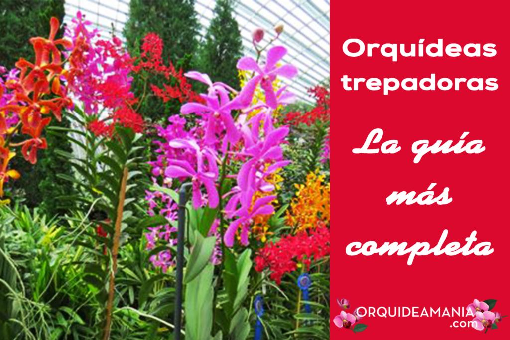 orquidea trepadora
