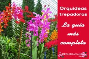 Orquídeas Trepadoras