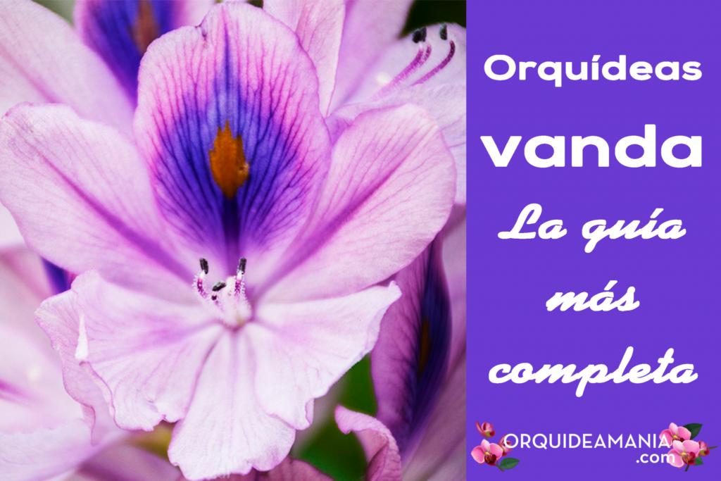 guia completa orquidea vanda