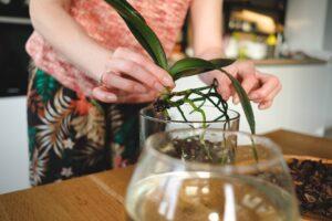 Raíces de las orquídeas | Todo lo que debes saber acerca de ellas