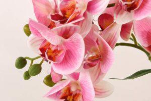Las mejores orquídeas artificiales