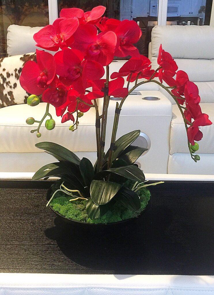 Rojas fotos orquideas ▷🌺 [Orquídeas
